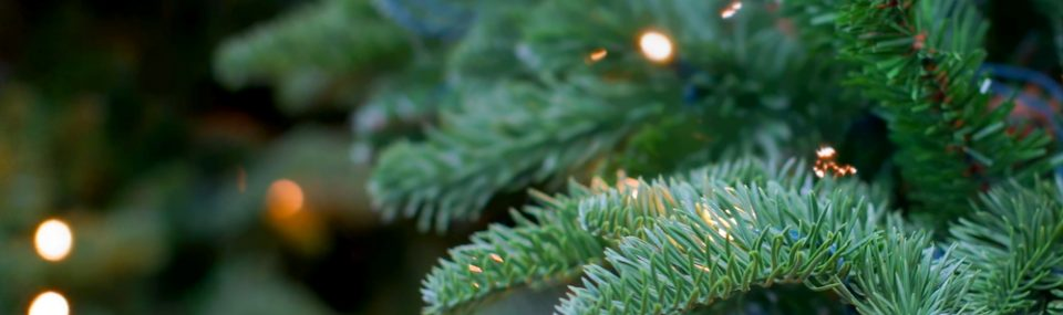 Christmas Tree - Cass-Stephens Gloucester opening times